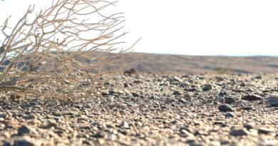 Un terzo delle terre del pianeta è a rischio desertificazione. L'allarme lanciato alla conferenza sulla desertificazione