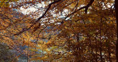 Un contest fotografico per chi ama la natura
